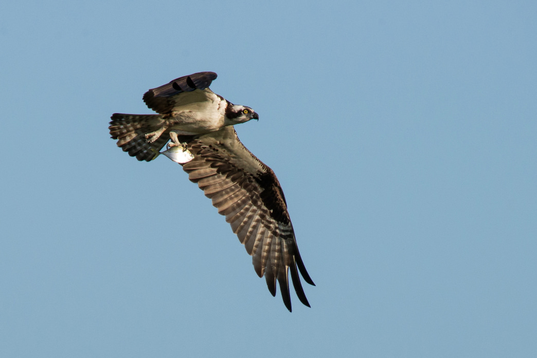 Look to the sky to see several species of birds native to the area, including herons, ospreys, and eagles.