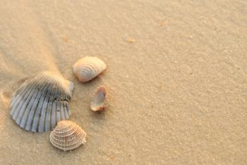 Orange Beach Seashells
