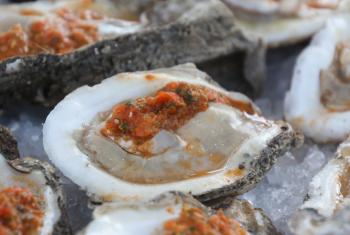 oysters, gulf shore
