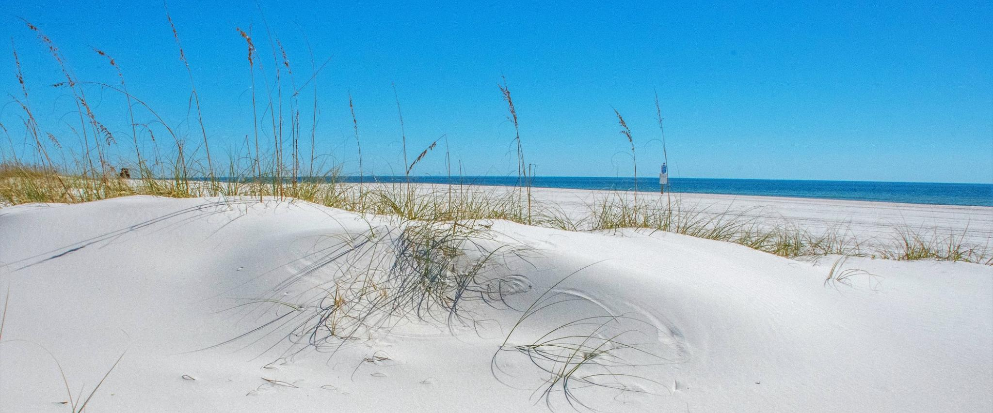 Orange Beach In the News