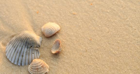 Orange Beach sea shells